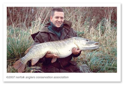 Some quality pike inhabit Bawburgh lakes