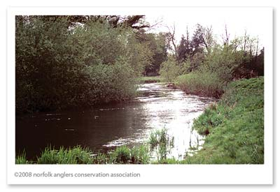 The river Wensum at Costessey, in need of restoration