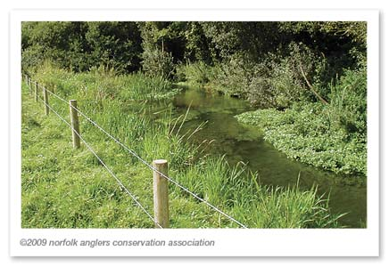 Photo 10: Recent Fencing Scheme on the River Bure showing plant re-colonisation.