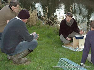 Learning about the mink traps on a Ketteringham's work party