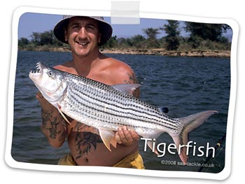 Tigerfish for Steve from Botswana