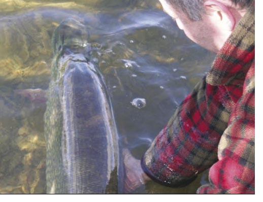 The immense thickness of the fish across its back as it lay in the margins before me was completely awesome to behold.