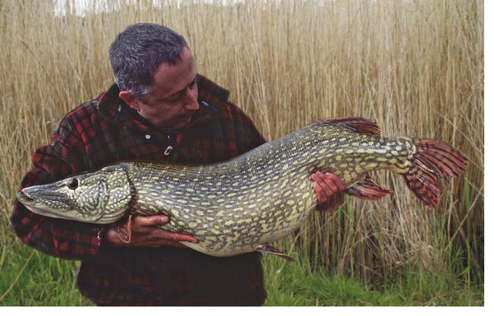 Christ, what a feeling; 37lbs of beautiful, previously uncaught pike.